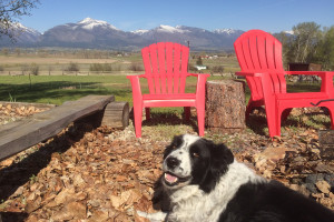 Wilderness Spirit Cabins - dogs welcome