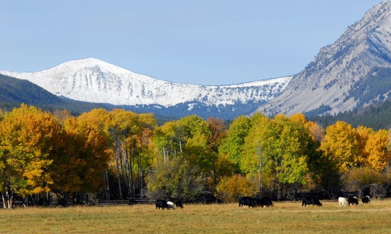 Horseback Riding through the Big Hole Valley in Montana