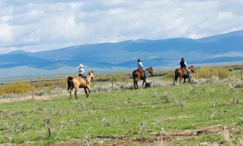 Missoula Montana Horse Pack Trips